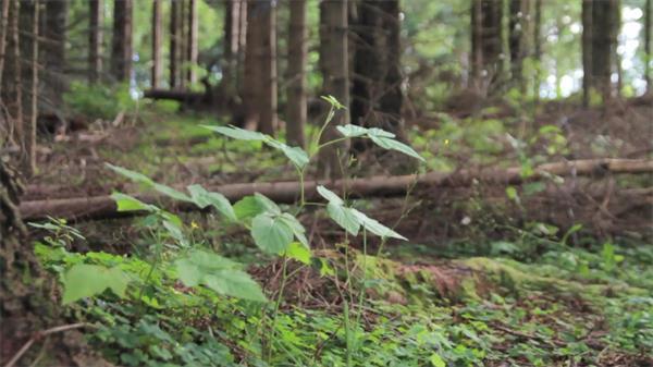 清新森林茂盛树木花草生长特写镜头大自然记录高清视频实拍