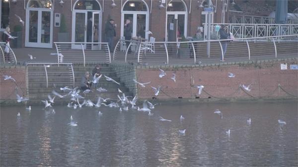 假日海边城市建筑海鸥飞翔女人喂养海鸥动物生活姿态高清视频实拍