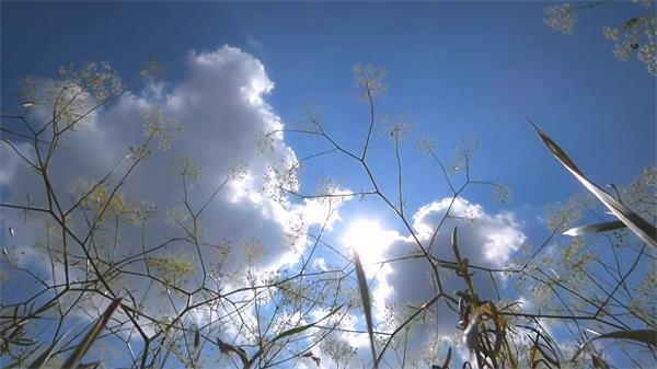 阳光明媚微风吹拂遍地田野花丛植物飘动姿态延时镜头高清视频实拍