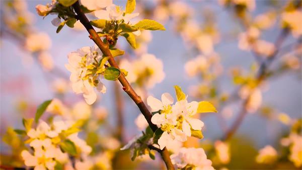 春天万物生长时节唯美花圃花朵怒放天然生态动物镜头特写高清视频