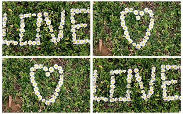 大自然草地下小菊花花朵拼成心形花愛詞形狀溫馨浪漫高清視頻實拍