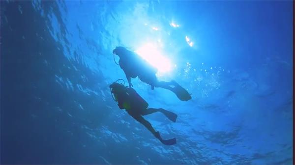 深蓝清澈唯美大海夫妇潜水探索观察海底世界海洋生物高清视频实拍