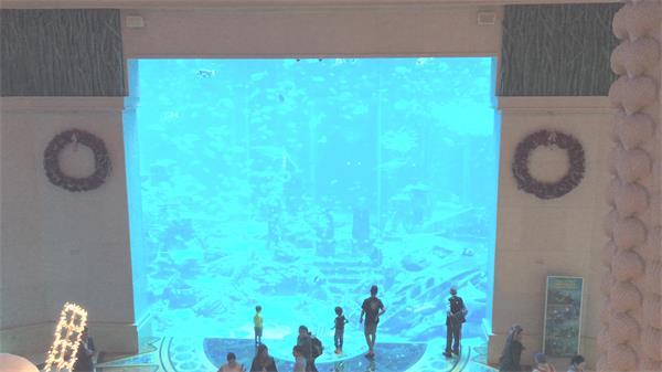 [4K]假期游客观赏水族馆海洋世界鱼类游动姿态远镜头高清视频实拍