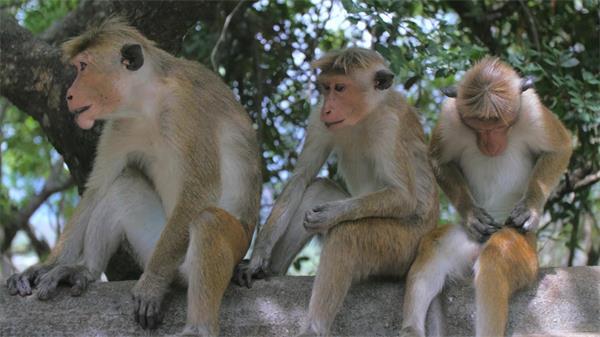 原生�B清新森林猴子�渖闲���力息�仙眢w�游镒�B�R�^高清��l��↑拍