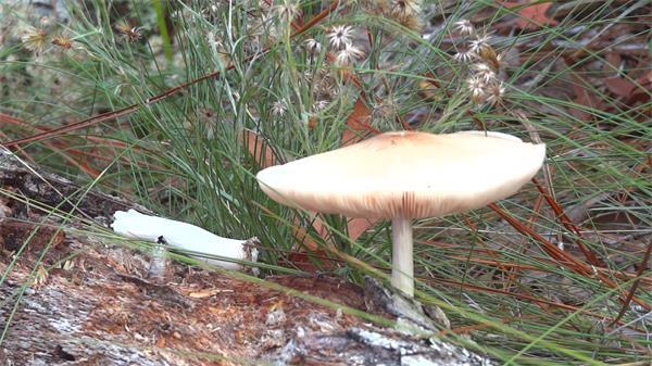 户外枯木上生长野生白色蘑菇菌类植物生长环境高清视频拍摄