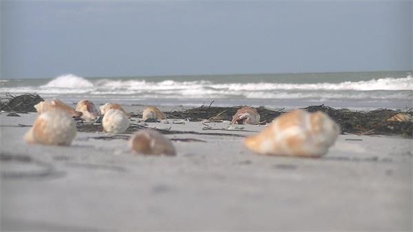 阳光沙滩海水波浪冲海岸边海滩上多种贝壳类型镜头高清视频实拍