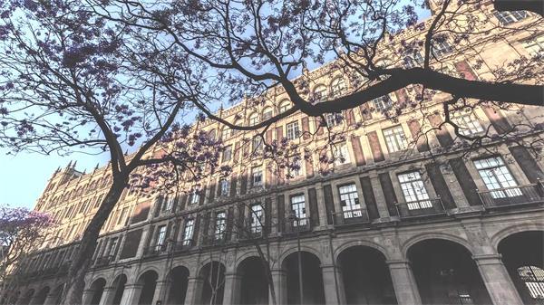 繁华城市建筑建设周边树木生长花朵盛开延时镜头高清视频实拍