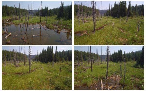 [4K]荒芜大自然森林草坪草地堆积水干枯树木树枝镜头高清视频实拍