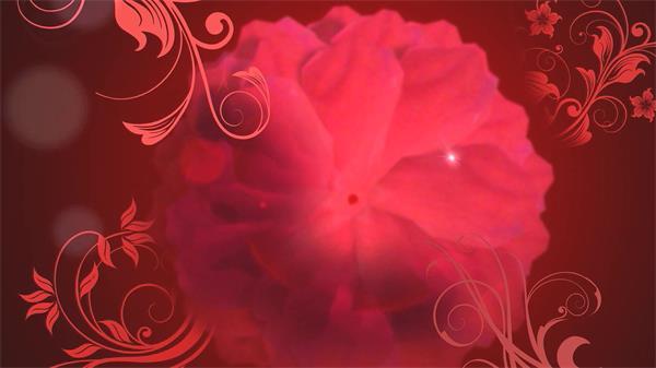 经典红色花朵旋转花纹图案延伸展现喜庆婚礼场景LED背景视频素材