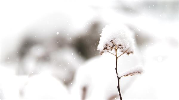 [4K]唯美下雪飘落雪花飘飘堆积成花朵虚化背景特写高清视频实拍