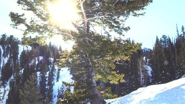 [4K]晴朗冬季陽光照射穿透樹木雪地唯美下雪場景鏡頭高清視頻實拍