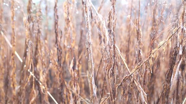 雨后場景荒廢土地枯萎植物干旱地區大自然掩護宣傳高清視頻實拍