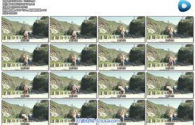 猛烈太阳下男士单手拿壶铃锻炼身体健身体育运动高清视频实拍