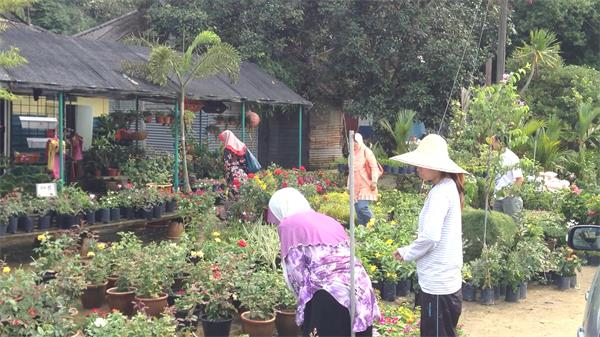 田园作风花店员工浇水摆放盆栽植物鲜花售卖花店高清视频实拍