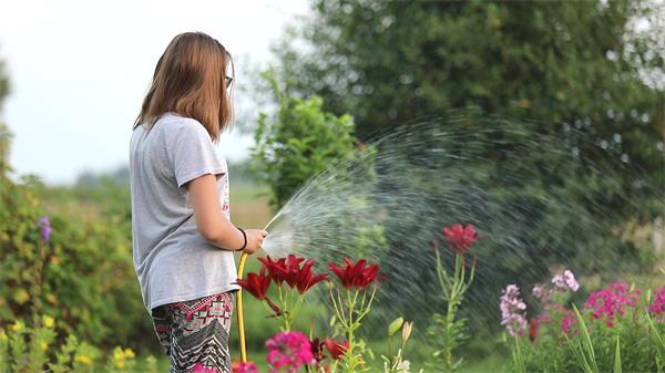 家庭主妇后花园勤劳拿水管喷水淋洒浇水花朵鲜花植物高清视频实拍