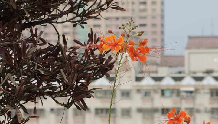 空旷建筑房屋顶楼花朵随风摇曳近景高清视频实拍