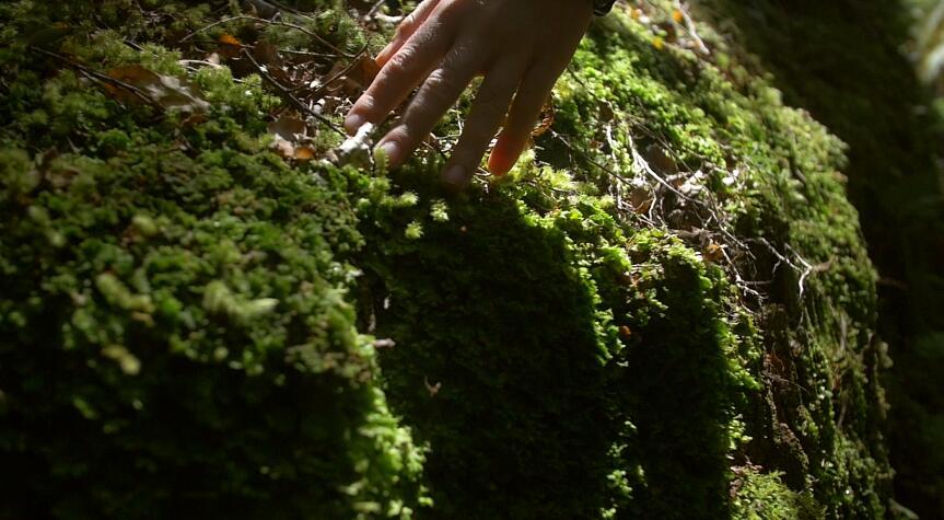 自然雨林阳光穿透抚摸岩石苔藓走过高清视频实拍