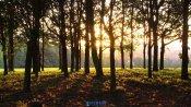 秋天落日穿过树林的人自然风景高清视频实拍