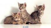 三只可愛小貓咪簡單畫面高清實拍