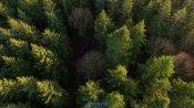 自然风景飞过森林航拍镜头高清实拍