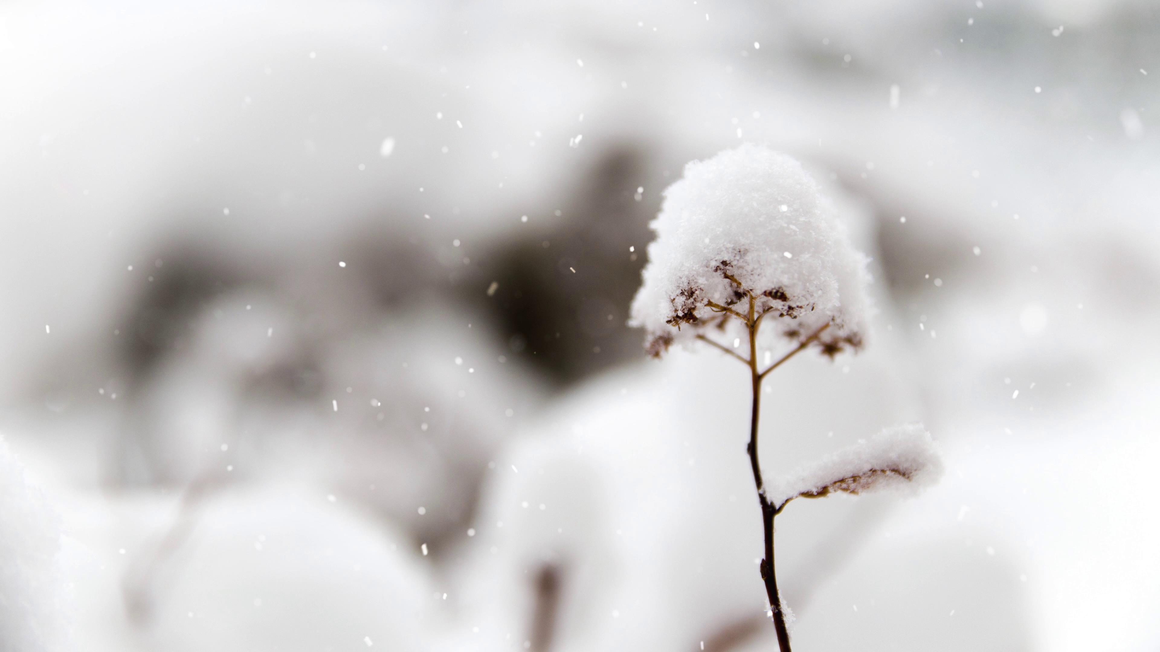 [4K]白茫茫雪花飘落近焦特写唯美背景高清实拍