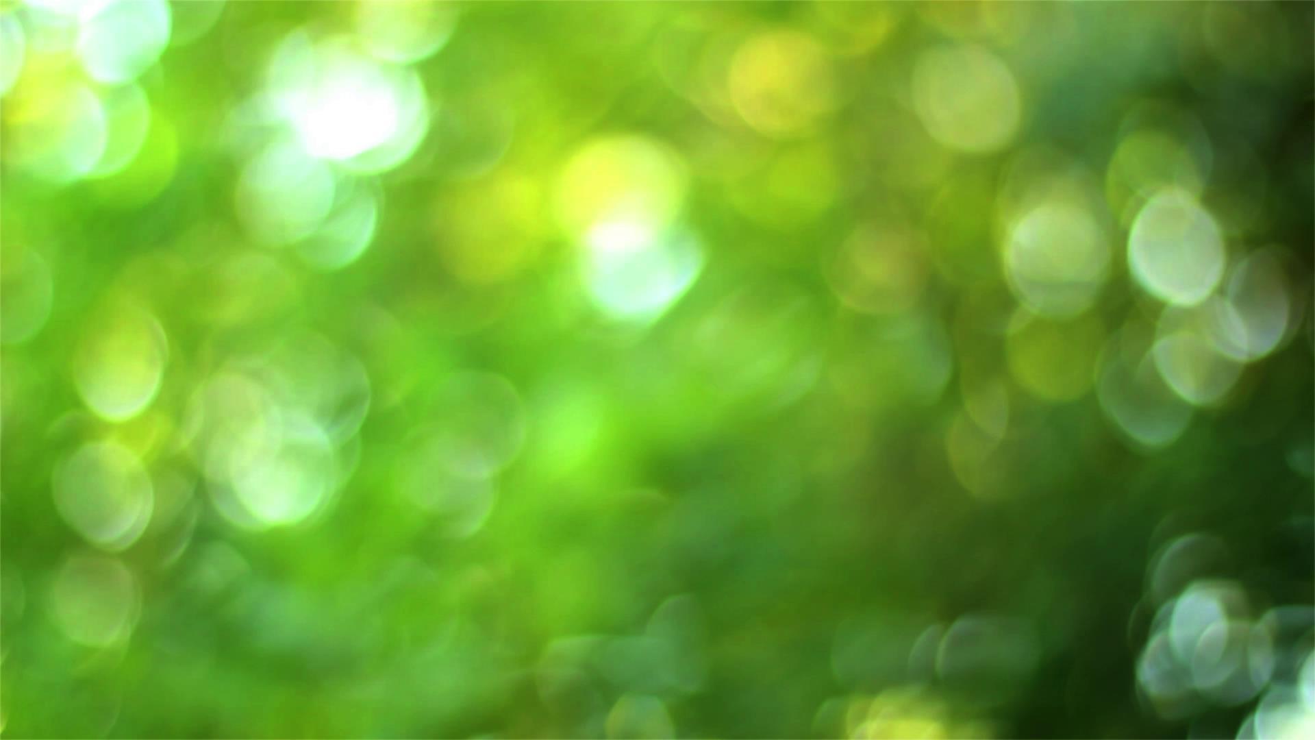 昏黄失焦亮堂的春天绿叶挪动镜头高清实拍
