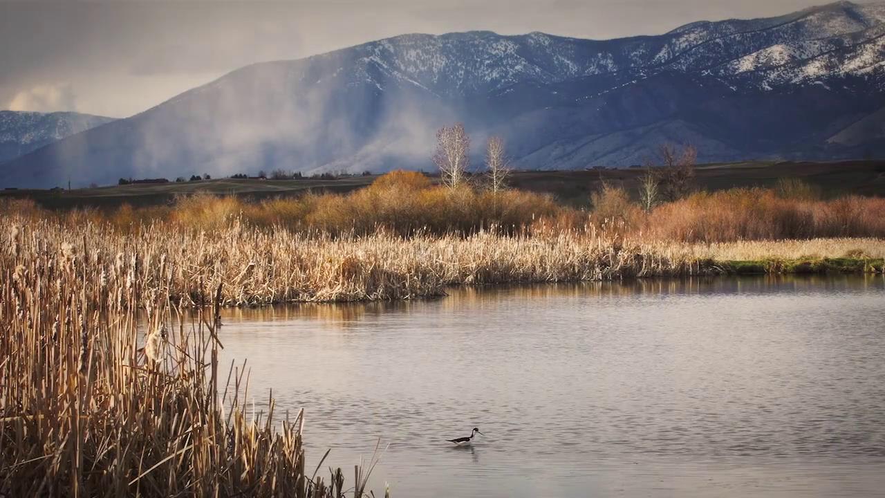 远山河流芦苇高跷鸟水中游动美丽自然风光高清实拍
