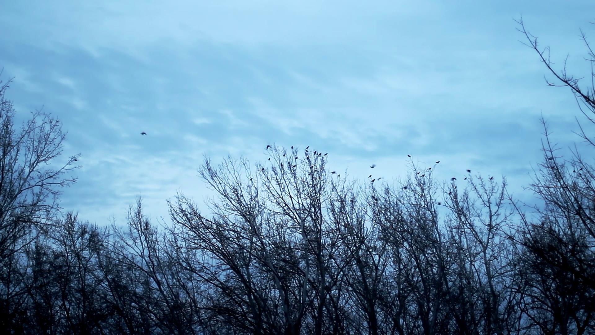 阴天蓝天树梢上鸟群飞散高清实拍