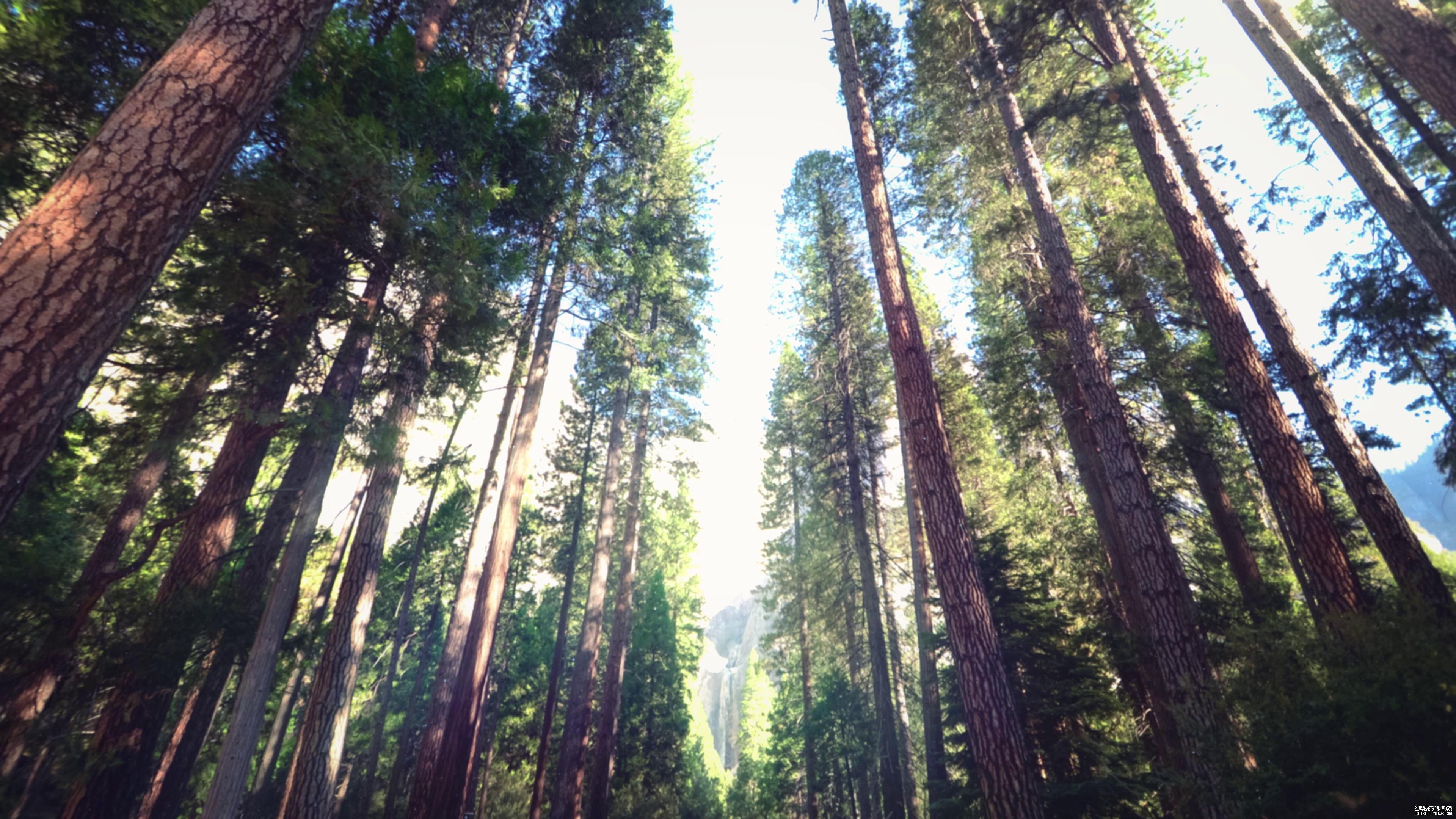 高大树木灌木林高清仰拍落日视频素材