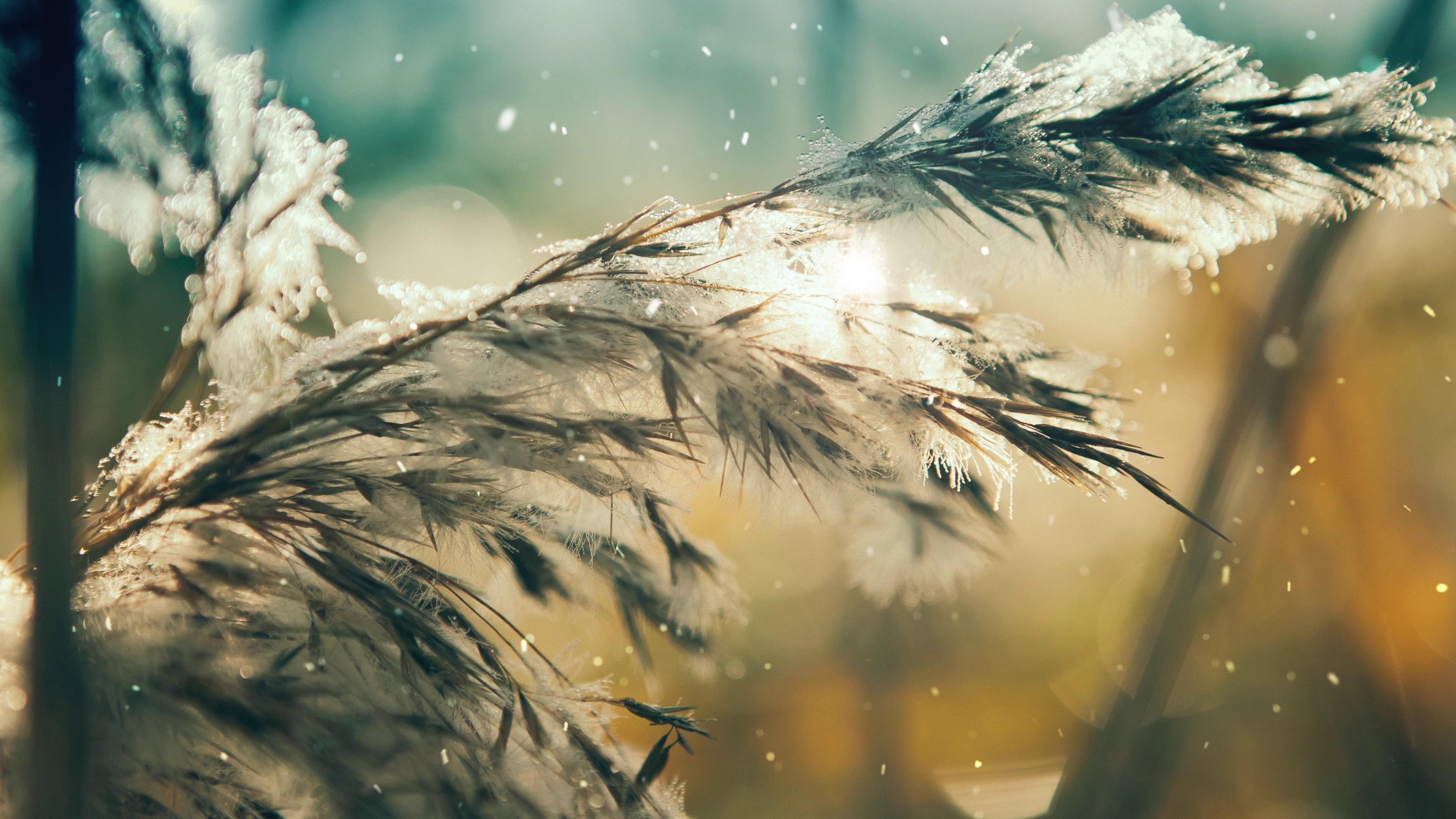 冬季雪花飘落树枝积雪特写美景镜头高清实拍