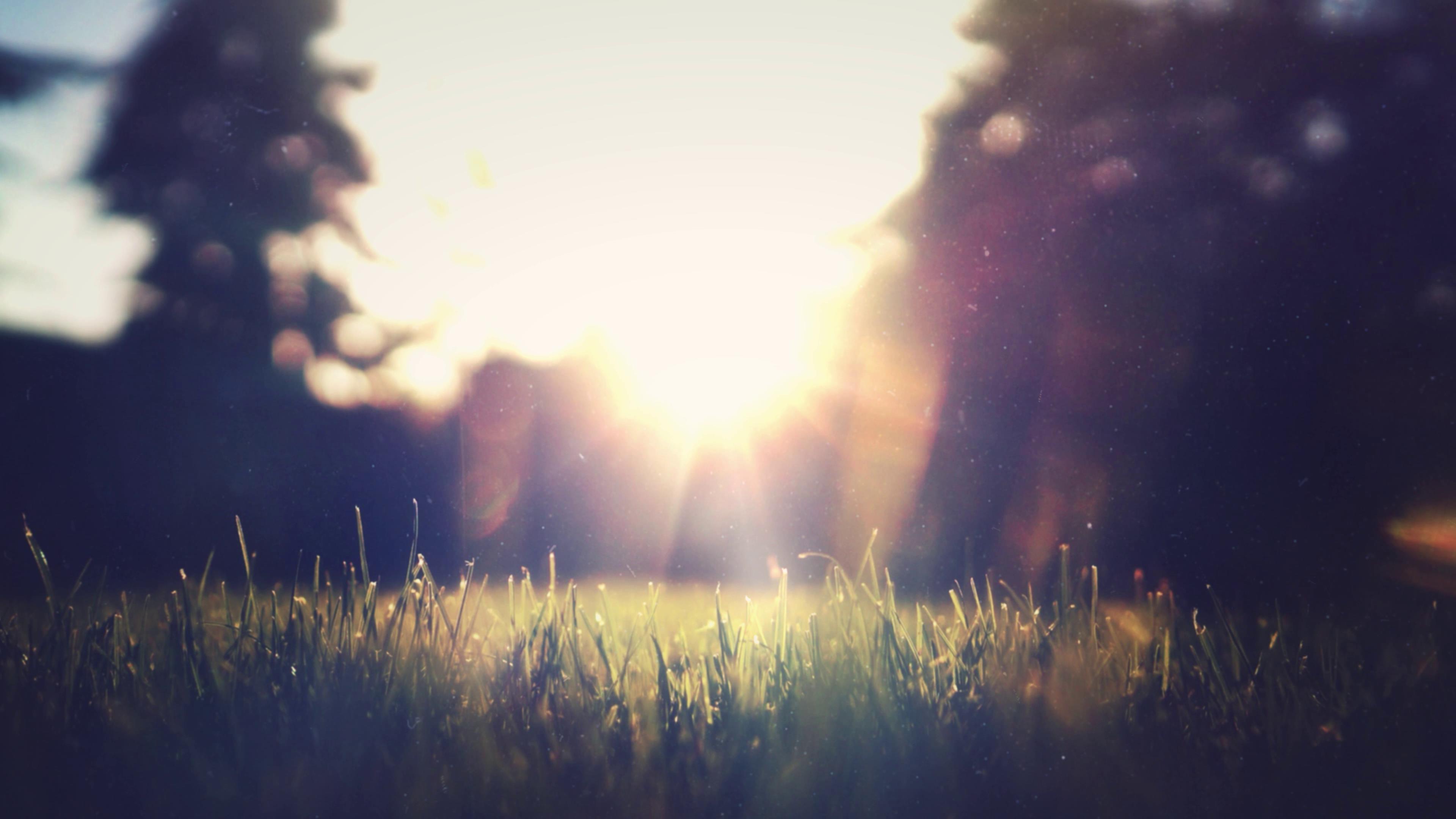 天井夕阳下草地光晕特写镜头高清实拍