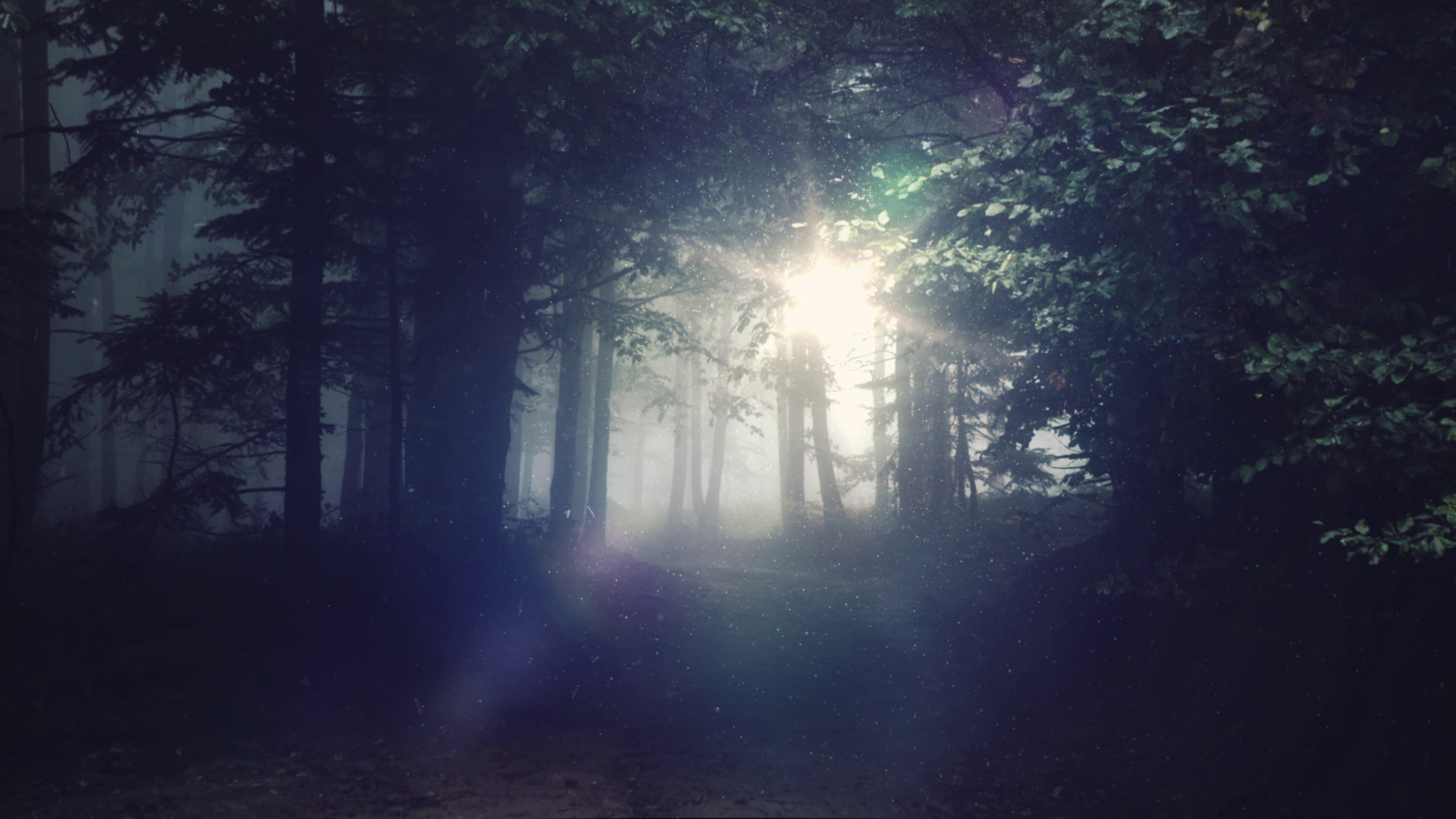 森林秘境光亮出口梦幻场景高清实拍