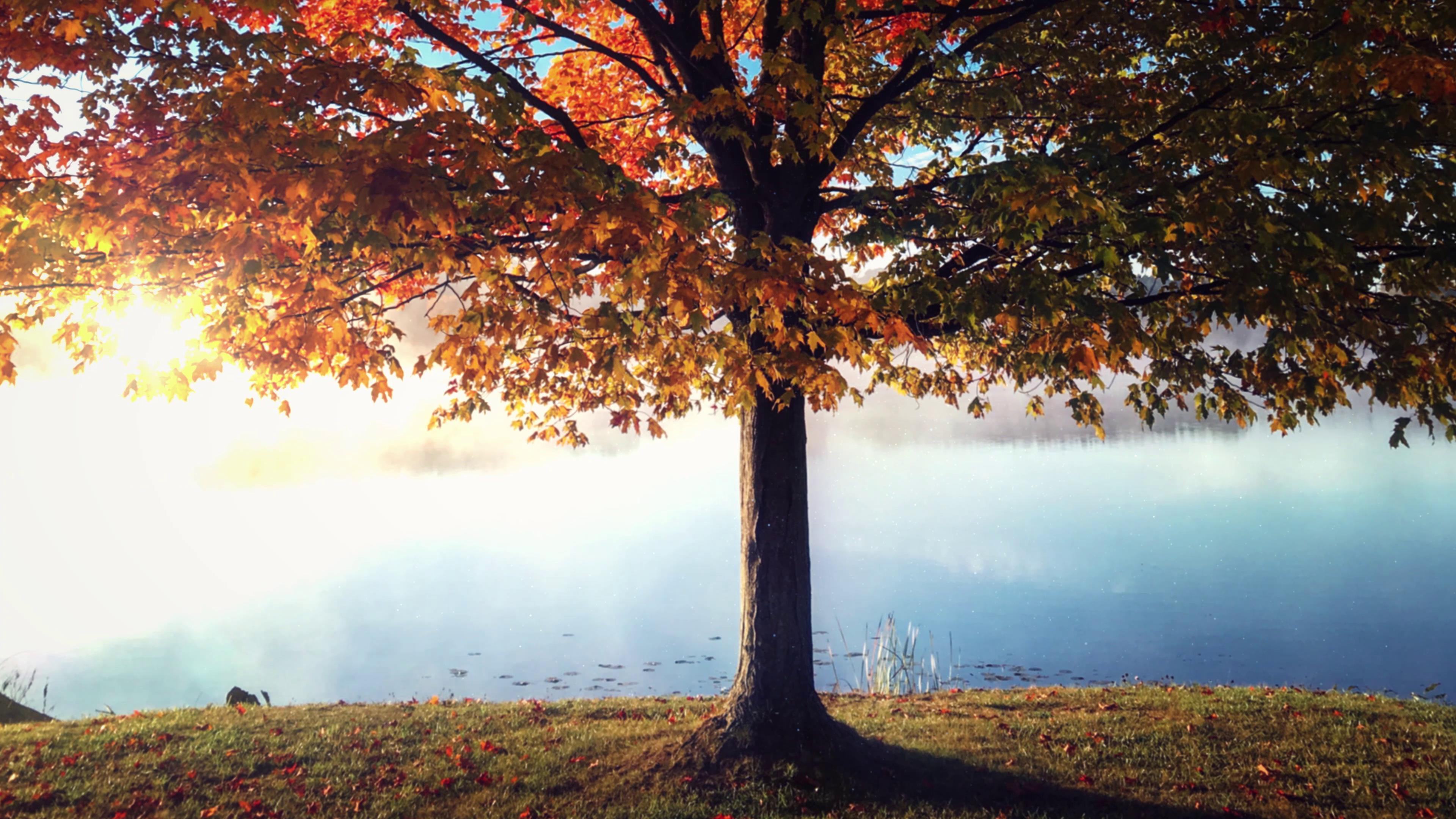 秋日池塘边的一棵树梦境美景高清实拍