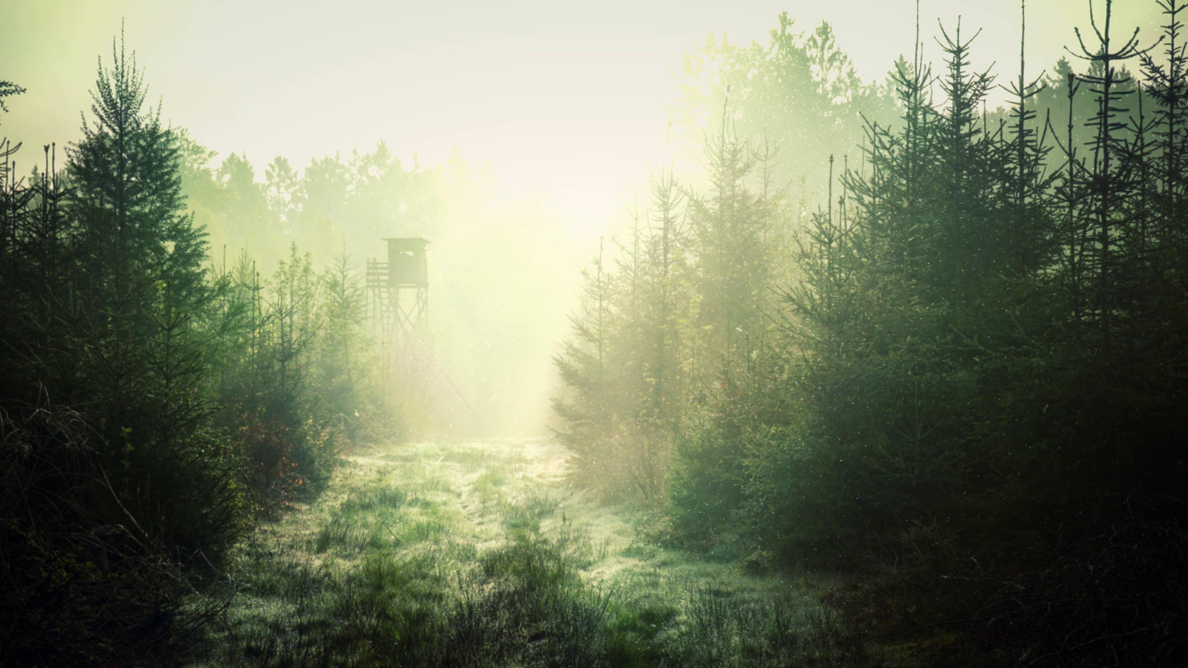 走近雾气蒙蒙的树林仙境跟镜头高清实拍