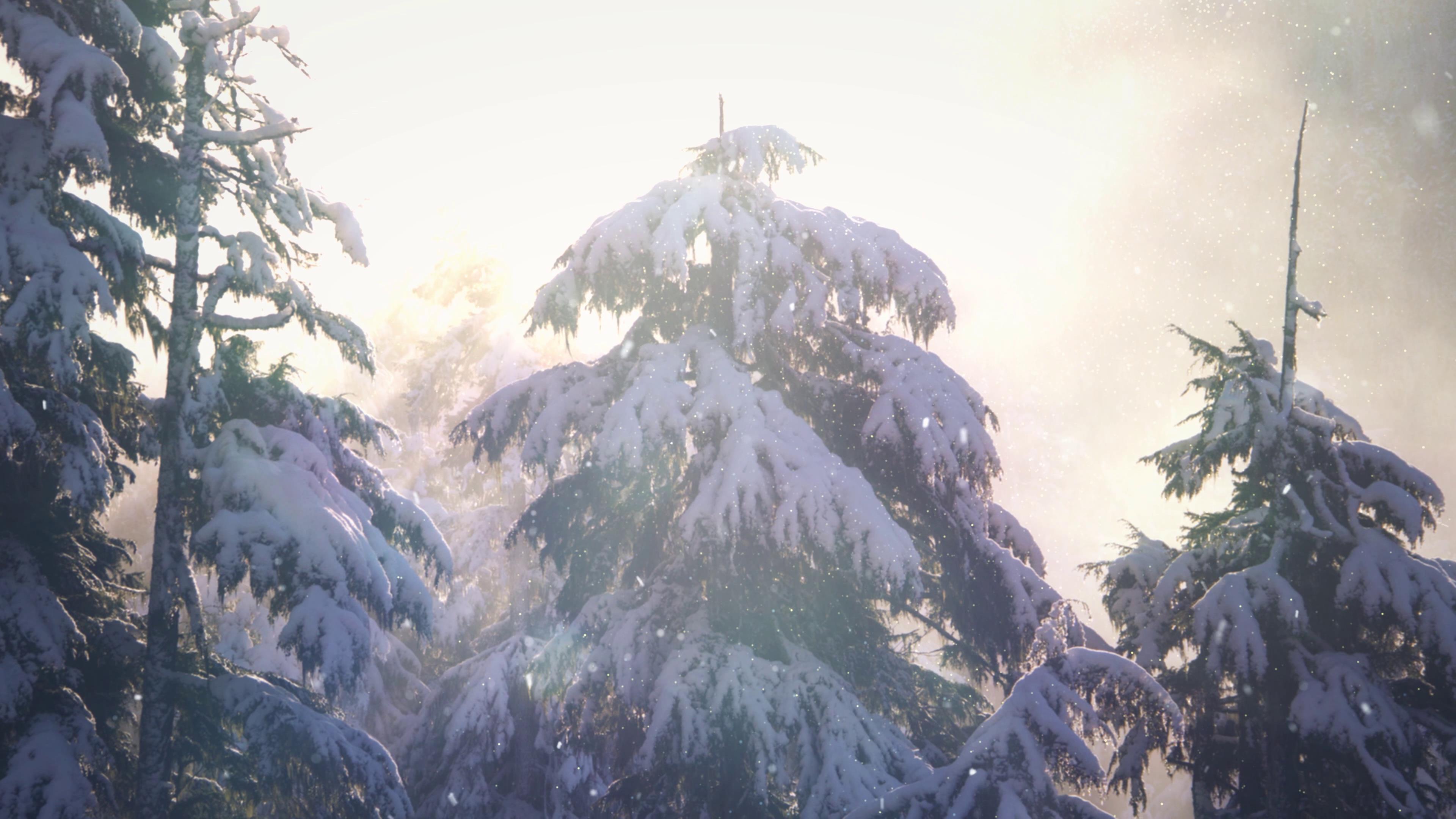 冬季阳光下大雪纷飞中的松树高清实拍
