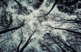 冬季森林树木仰拍雪花飘落镜头高清实拍