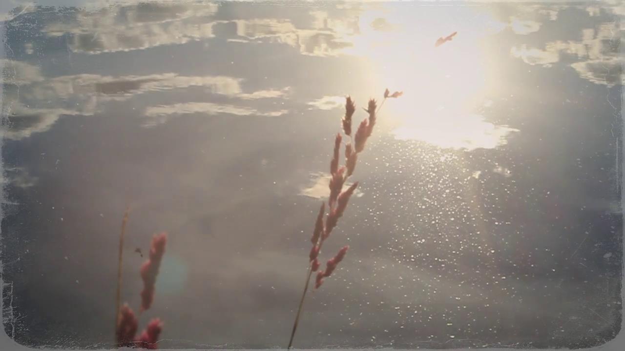 湖面水边芦苇近景特写散焦镜头高清实拍