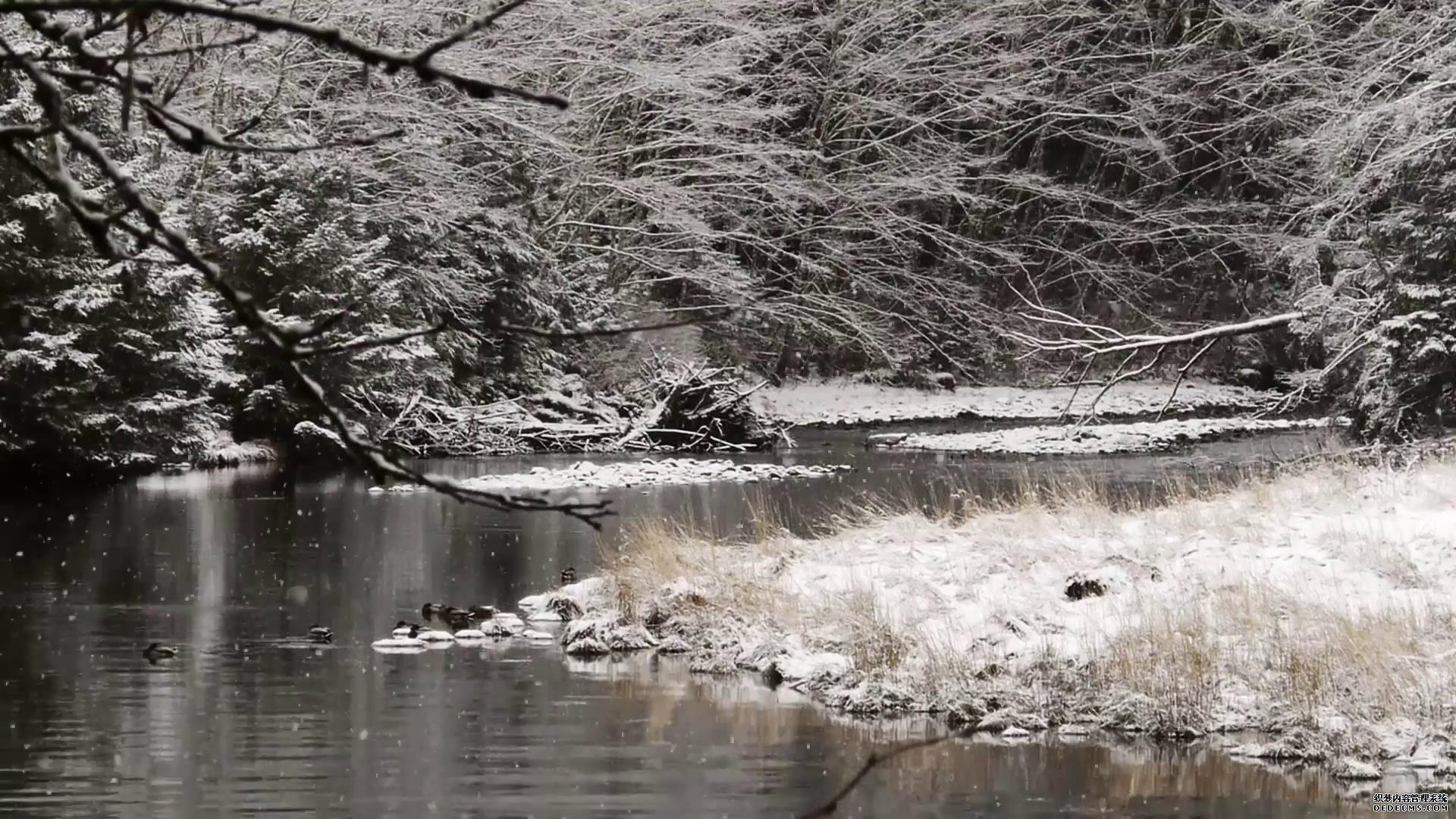 小河边雾凇树旁唯美雪景高清实拍